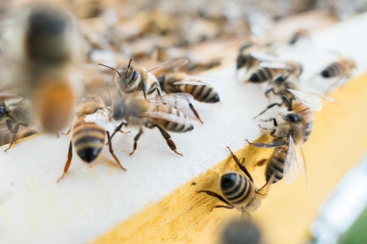 世界王者バルベルデ、レース中に蜂を飲み込んでしまう